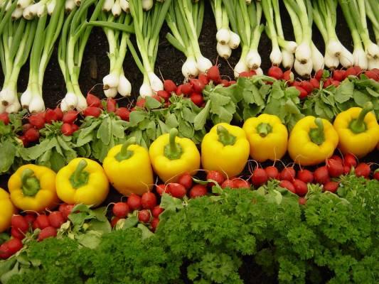 2e1ax_default_entry_organic-farming